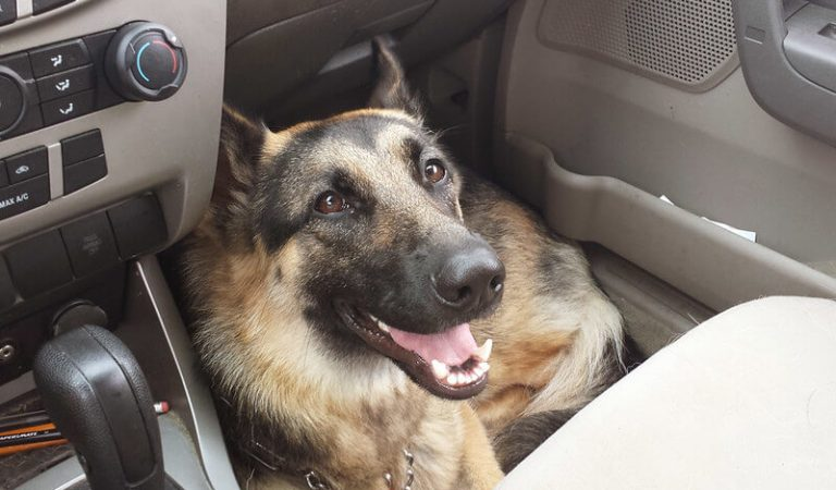 Can Your Dogs Get Carsick?