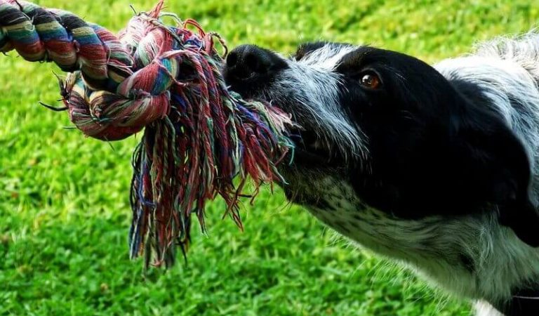 How to Train Your Dog to Play Tug of War