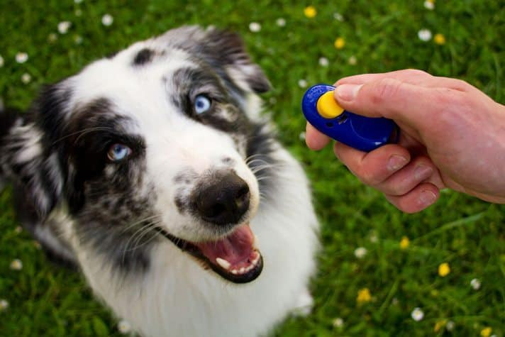 Training a dog with a clicker