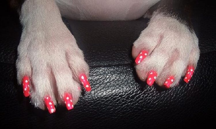 Is It Safe To Paint Your Dog's Nails?