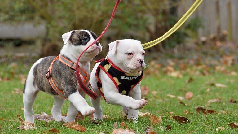 How to Leash Train Dogs