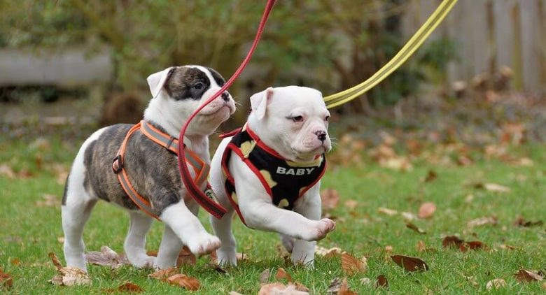 Walking puppies on leash