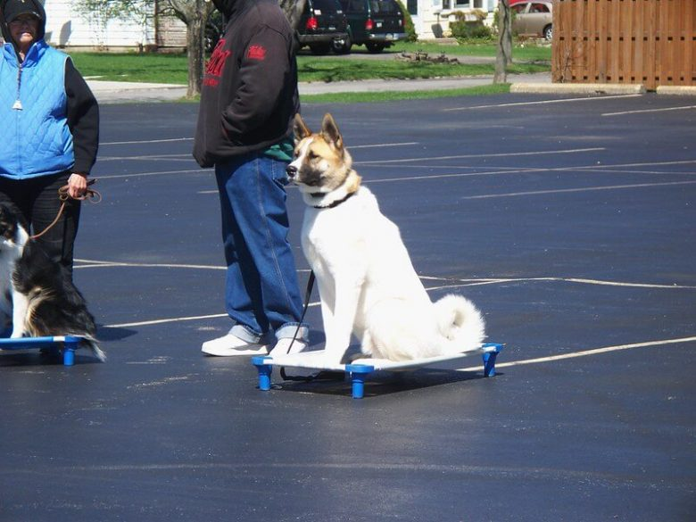 Training a dog to sit