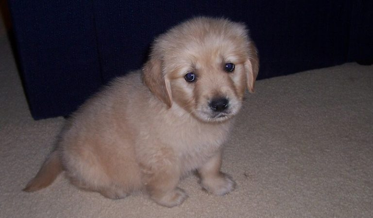 Can I Housebreak a Puppy Without Using a Crate?