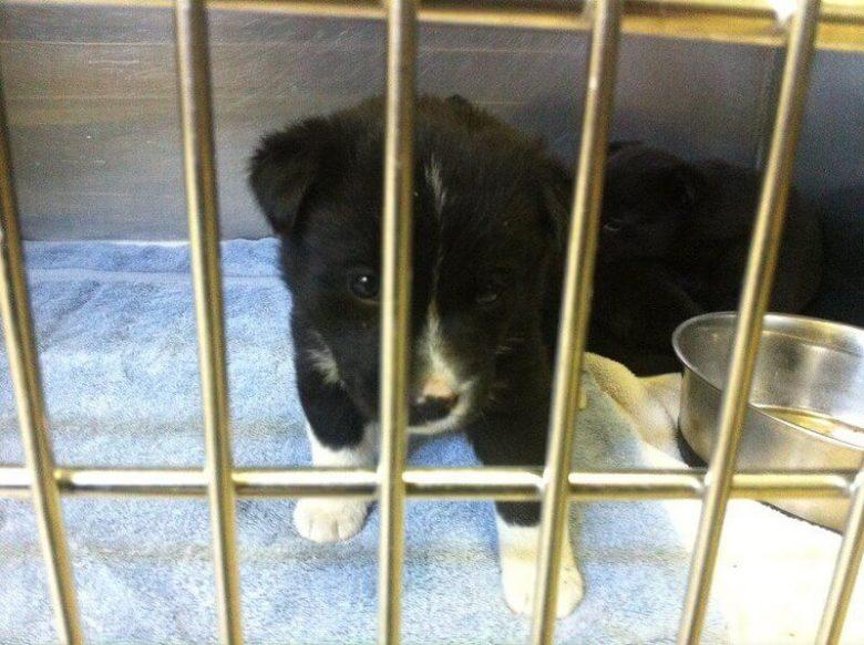 Puppy sitting in a crate