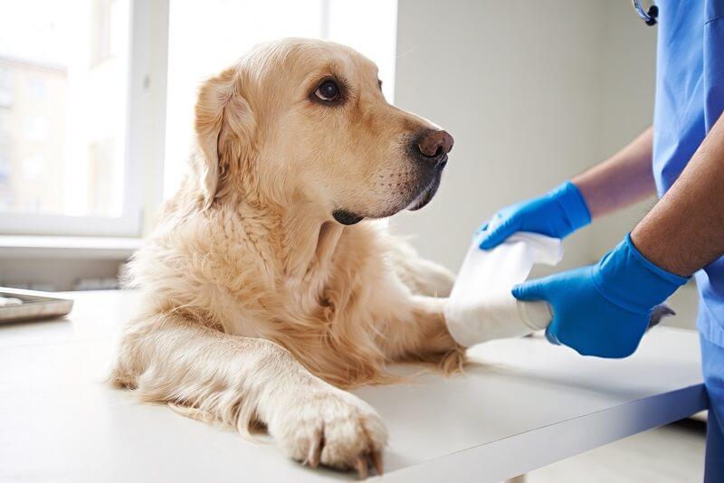Dog paw bandage