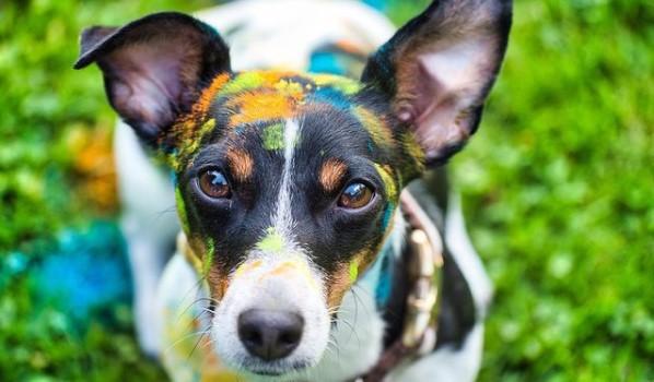 90 Female Jack Russell Terrier Names