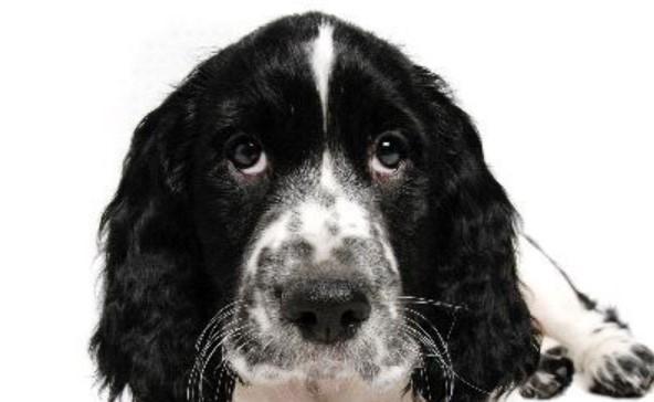 Why a Dog Eats Feces, What It Lacks