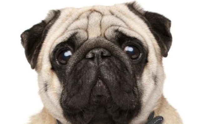 The 10 Biggest Parenting Mistakes in Dogs – and How to Avoid Them